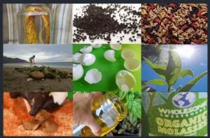 10 Natural Fertilizer Recipes