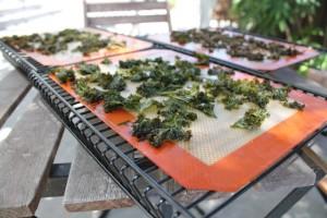 Kale-Chips-300x200