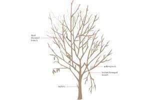 Care Maintenance of fruit trees