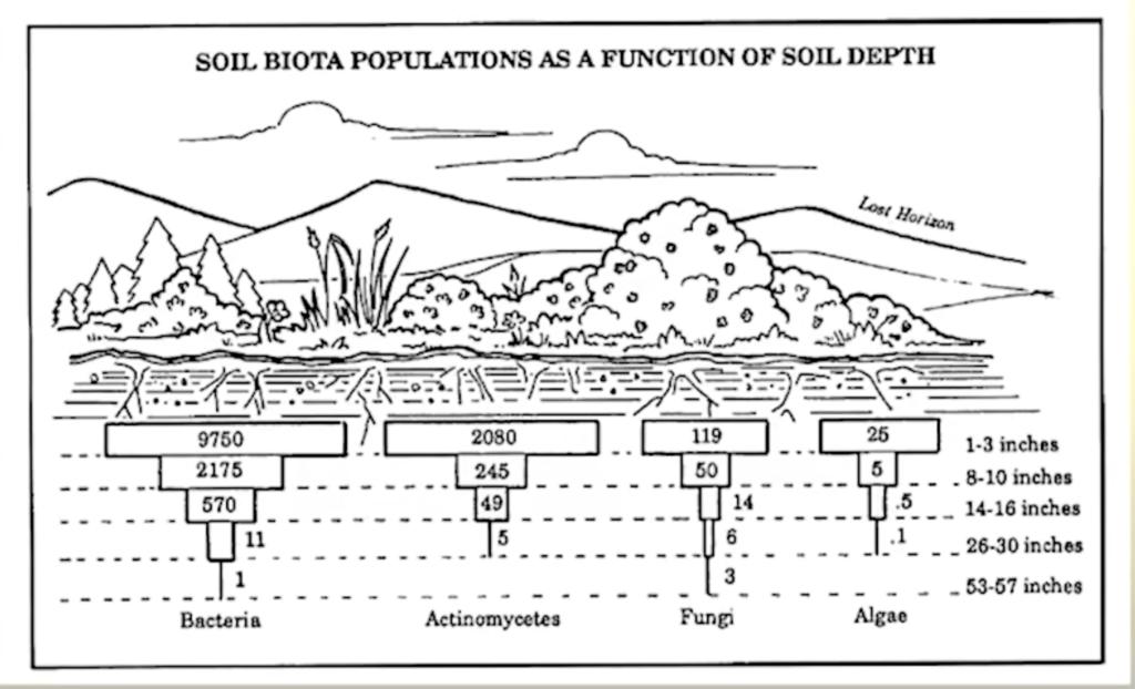 Understanding Roots